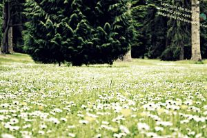 Peaceful and Green by xXHeatherXD