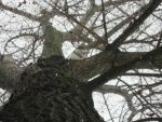 Other Photo of Him stuck in Tree by owl-with-no-wings