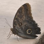 Butterfly 2 by Spiteful-Pie-Stock