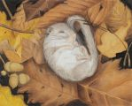 Sleeping Glis glis - edible dormouse by EpHyGeNiA