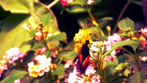 Butterfly on flowers :) by hannie001