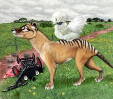 Iluka And Karl Meet, thylacine and chicken by Psithyrus