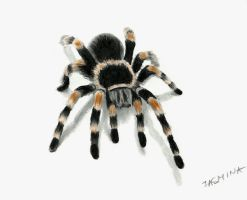 3D drawing of tarantula spider by JasminaSusak