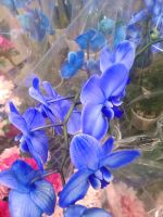 Blue Orchids by A7XFan666
