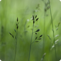 Grass by Camomelle