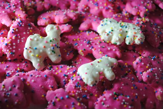 Circuis Animal Cookies by Samareck-Photo