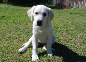 Willow 14wks old by Inara28
