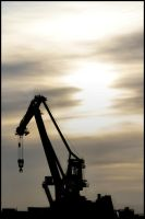 Craning toward the sun... by SWAT-Strachan