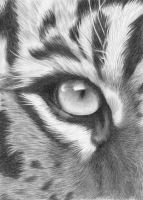 The Eye of the Tiger by kad-portraits
