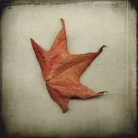 happy dancing leaf by fotocali