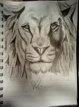 Lion - Pencil drawing. by TardisBoy2