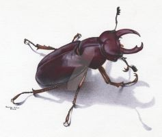 Stag Beetle by Christine-Hutson