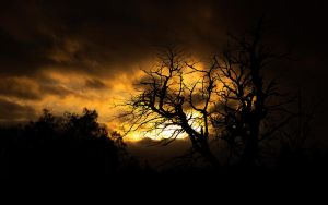 Tree and Sunset by opfinger