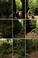 Puzzlewood 10 by Tasastock