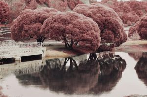 Infrared by LinkyQ