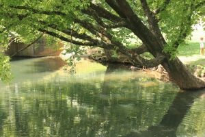 Tree over the water by NHuval-stock