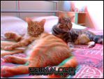 Cats 3D by PrimalOrB