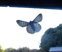 Moth on the window by AfricanObserver