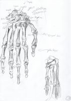 more anatomy practice. hands. by Ivory-Shadows