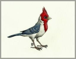 Red-Crested Cardinal by Zerda-Fox