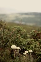 Lovely mushrooms by RoninCZ