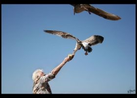 Feed The Birds 2 by iFix