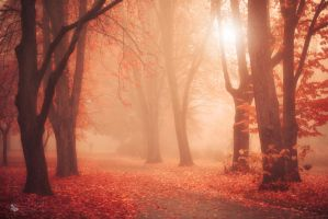 No Time To Cry by ildiko-neer