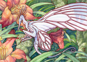 Roots and lilies ACEO by thedancingemu