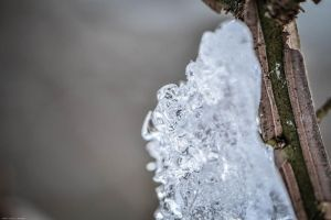Ice- closeup by WickedOwl514
