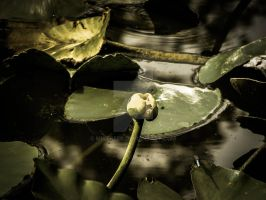 Pond by mikeheer