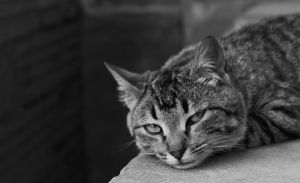 My cat is melancholic by Andrei-Azanfirei