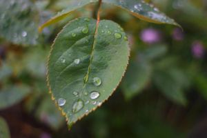 Raindrops by dps-Aerion