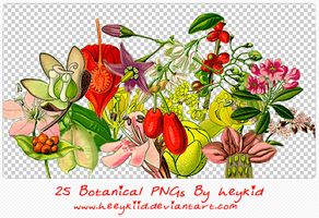 25 Botanical PNGs By heykid by heeykiid