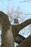 Squirrel in Tree II by Stock-Wulf
