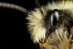 Im a Pretty Bee by Alliec