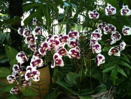 Orchid Shroud by september28
