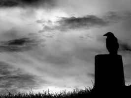 Raven 2 by MG-777