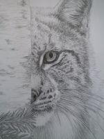 Close up of the Lynx- Detail by deerhunter2012