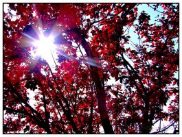 Sun in the Red Tree by grenouille-enchantee