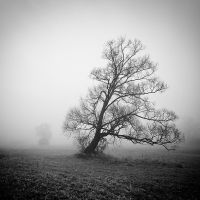 Portrait of the tree VIII by EmilStojek