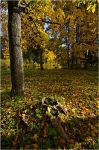 Autumn 2011... _5 by my-shots