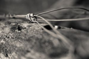 fraying wire by Lineola