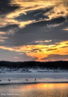 Goose Watching Sunset by abstractcamera