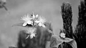 038bw by Placi1