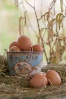 Eggs by SarahharaS1