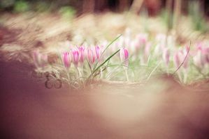 Spring by EliseEnchanted