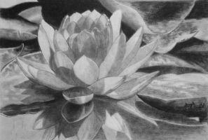 Water Lily by mritunjay-singh