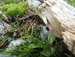 Moss found it's way here by Fgpinky123