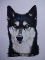 Siberian Husky Mishka Watercolour Portrait by Ezekiel-J