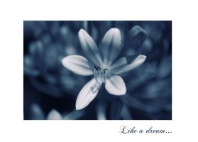 Like a Dream by Nataly1st